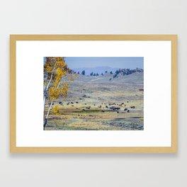 Bison, Lamar Valley, Yellowstone Framed Art Print