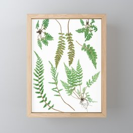 Ferns on White II - Botanical Print Framed Mini Art Print