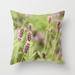 lavander Throw Pillow