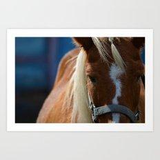 Renaissance Pony - Sorrel Blue Art Print