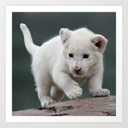 White lion cub Art Print