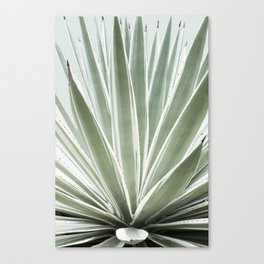Tropical Century Plant Photography  Canvas Print