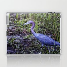Little Blue Heron Strut Laptop & iPad Skin