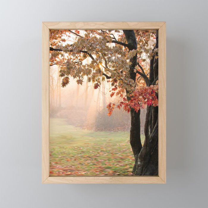 Japanese Maple at Sunrise in Fall Framed Mini Art Print