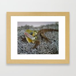 Boyds Forest Dragon Framed Art Print