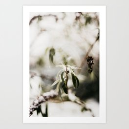 Dutch winter leafs in the snow | outdoor photography Art Print