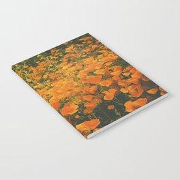 California Poppies 003 Notebook