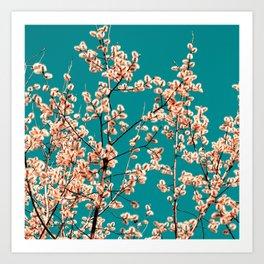willow catkin II Art Print