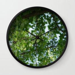 Ginkgo biloba tree in the city Wall Clock