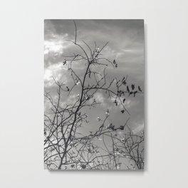 Spring 2015 Metal Print