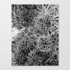 Gum Balls Canvas Print