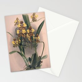 Vintage Orchid Print - Reichenbachia (1894) - Oncidium macranthum Stationery Cards