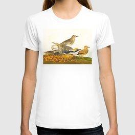 Grey plover John Audubon vintage scientific bird illustration T-shirt