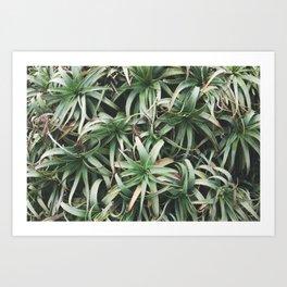 Aloe, mate. Art Print