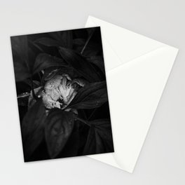 Peony after the rain - Black and White II Stationery Cards