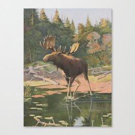 Vintage Moose Illustration (1902) Canvas Print