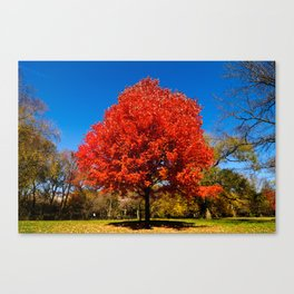 """Autumn Red"" Canvas Print"