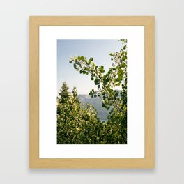 Aspen Leaves Framed Art Print