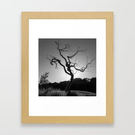 Gothic Twisted Tree - Black and White Framed Art Print