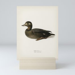 Velvet Scoter male (Oidemia fusca) illustrated by the von Wright brothers. Mini Art Print