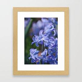 AFE Blue Hyacinth Framed Art Print