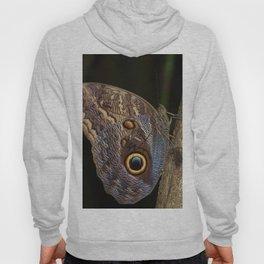 Owl butterfly in Costa Rica - Tropical moth Hoody