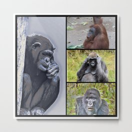 primates collage Metal Print