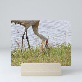Sandhill Cranes 1 Mini Art Print
