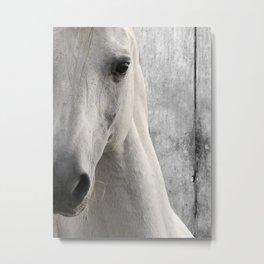 Horse Photography White Horse Close Up Modern Home Decor Art A833 Metal Print