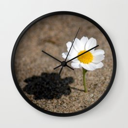 daisy in the sand Wall Clock