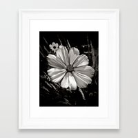 cosmos Framed Art Prints featuring Cosmos by BavosiPhotoArt