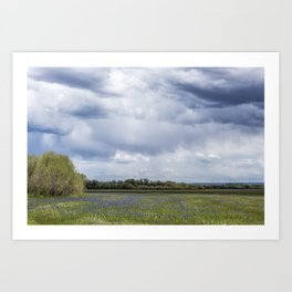 Field of Camas and Dandelions, No. 2 Art Print