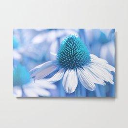 Coneflower blue 11 Metal Print
