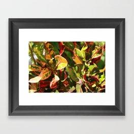 Croton Vibrancy Framed Art Print