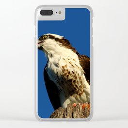 Osprey With His Dinner Leftovers Clear iPhone Case