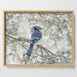 Snow Jay: American Blue Jay Serving Tray