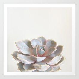 Pink Succulent Art Print