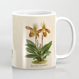 Cypripedium crossianum old plate Coffee Mug