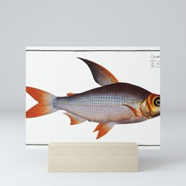 Toothless Salmon (Salmo edentulus) from Ichtylogie, or Histoire naturelle generale et particiére des Mini Art Print
