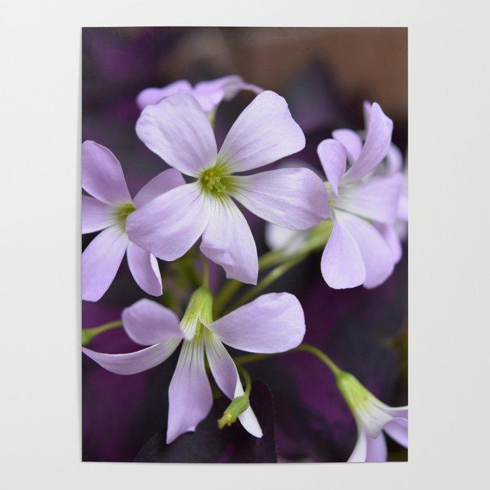 Flower Flowers Delicate Lavender Petals Small Purple Flowers