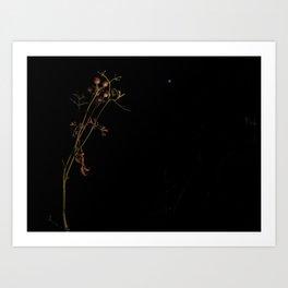 Nighttime Cilantro and Moon Art Print