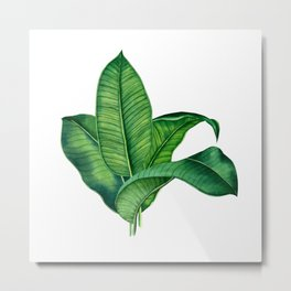 Elephant Plant Metal Print