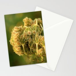 Queen Anne's Lace Flower About to Bloom Stationery Cards