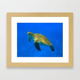 Wildlife: Green Turtle I Framed Art Print