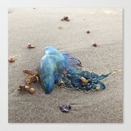 "Jellyfish ""Portuguese Man Of War"" on Galveston Island Beach Canvas Print"