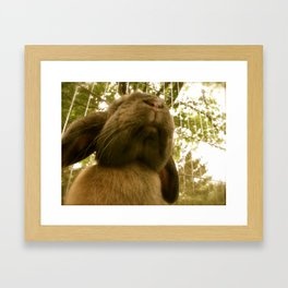 Giant Bun Framed Art Print