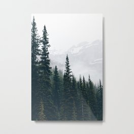Evergreens in the fog Metal Print