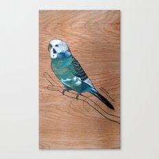 Budgerigar Canvas Print