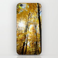 Fall forest iPhone & iPod Skin