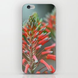 Delicate Aloe - Botanical Photography By Sharon Cummings iPhone Skin